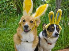 Dogs-In-Easter-Hats